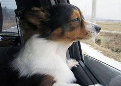 Cane che sta andando via