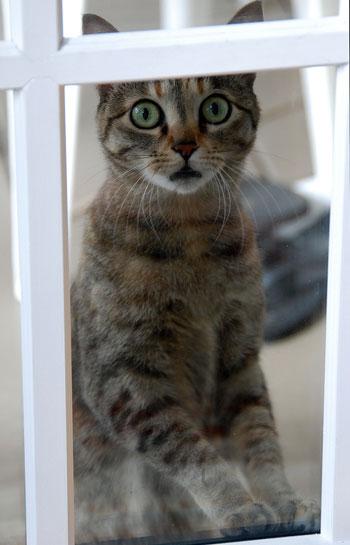 Gatto che spia
