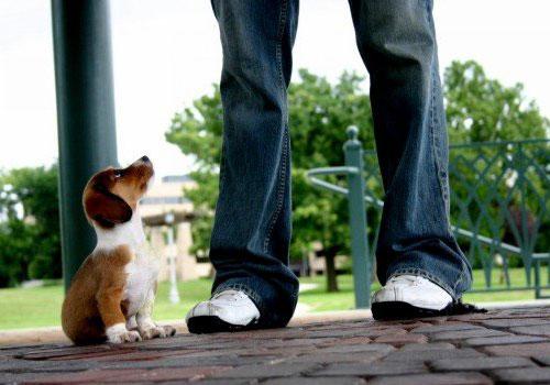 Cane che si sente piccolo
