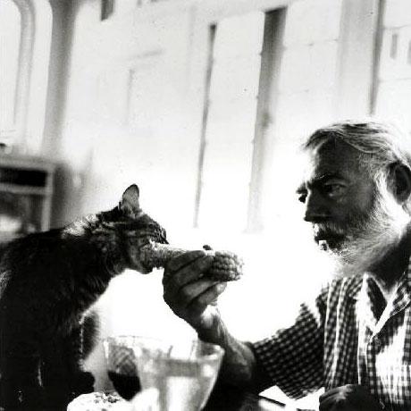 Gatto che mangia la pannocchia di Ernest Hemingway