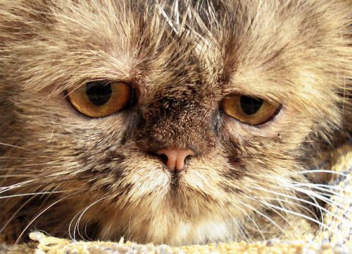Gatto che purtroppo sa cosa deve fare
