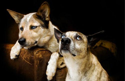 Cani che aspettano Godot