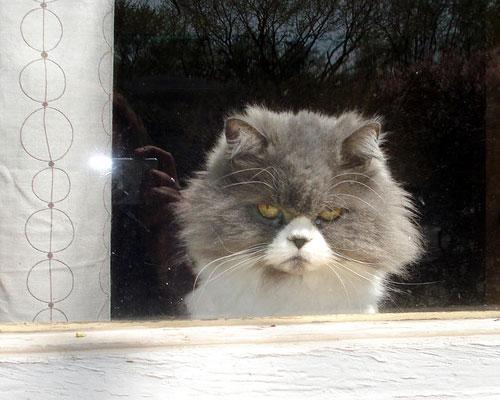 Gatto in castigo