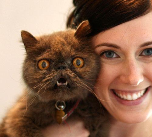 Gatto terrorizzato dalle macchine fotografiche