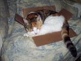bebe in a box