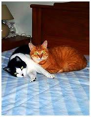 Buzina e Leo