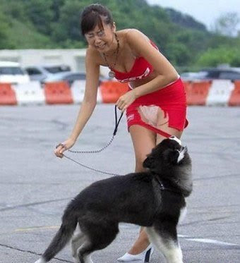 IS WRONG ON THE PHOTO? FUNNY?: FUNNIEST PHOTO EVER - DOG RIPPED WOMAN ...
