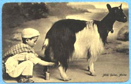 Maltese boy milks goat circa 1910