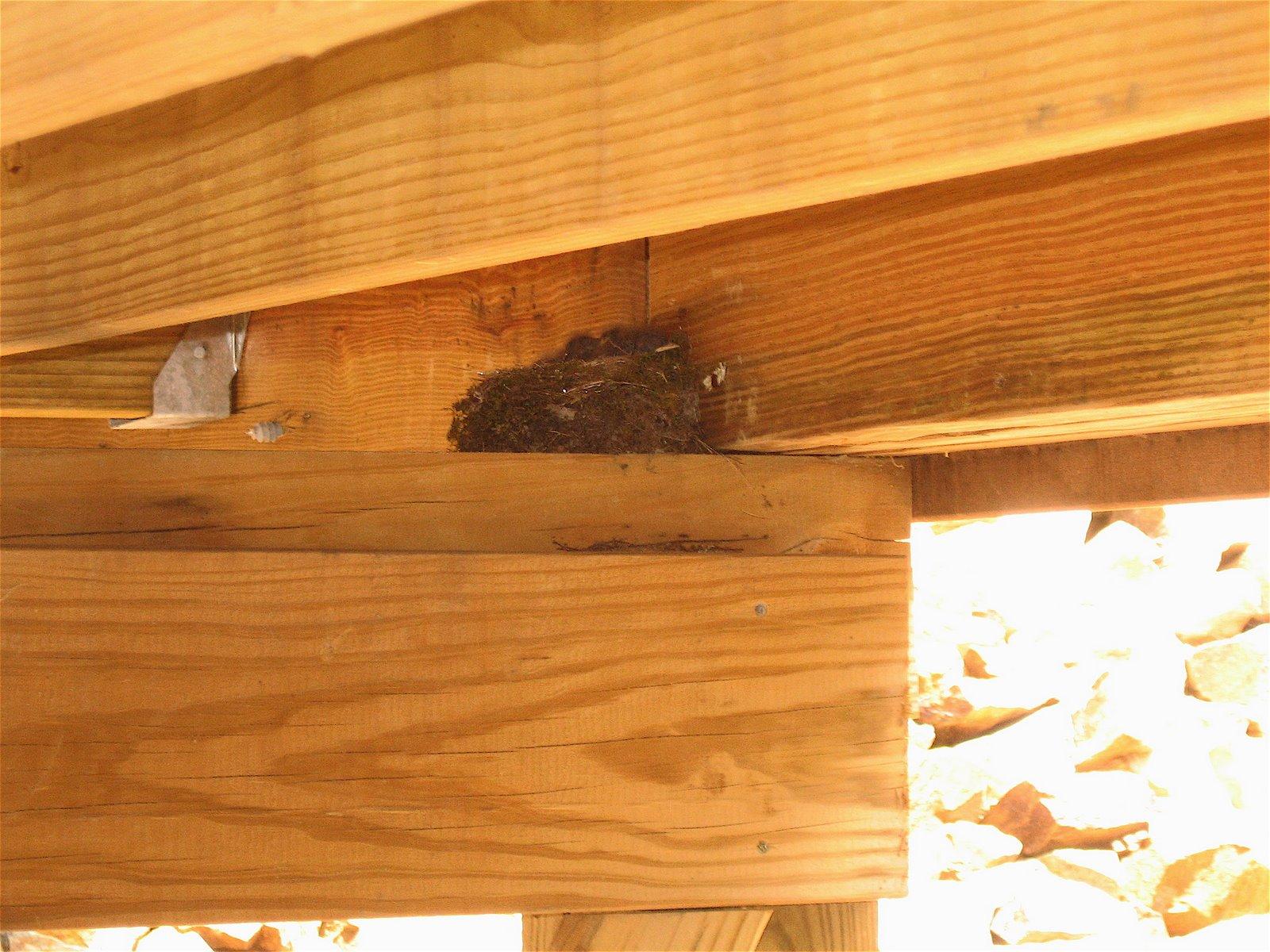 [Bird+Nest.JPG]