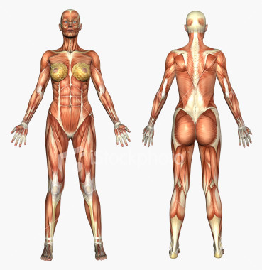 Picture Anatomical Position Human Body http://hardinata-tjoa.blogspot.com/