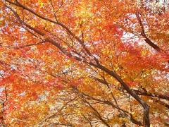 Love U Japan