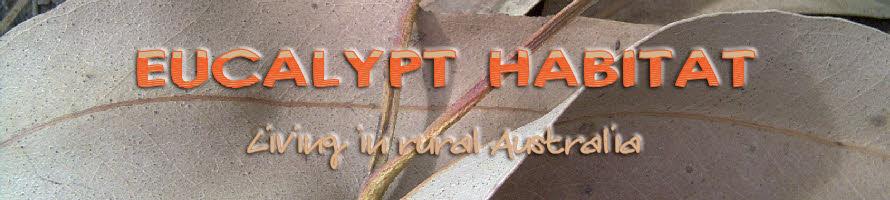 Eucalypt Habitat