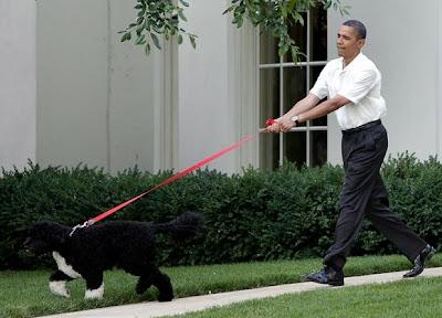 El arte de pasear un perro correctamente
