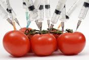 IL CIBO OGM FA MALE