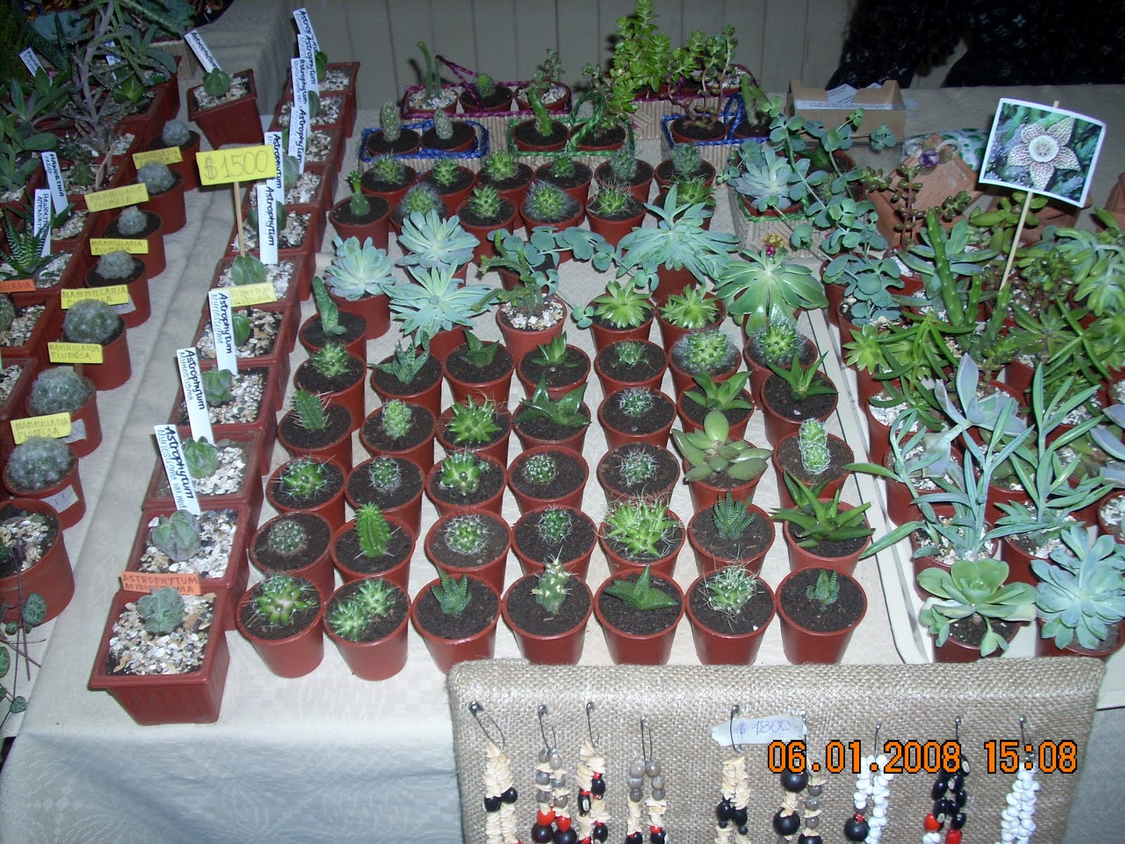 Vivero sanssouci vivero sanssouci un concepto de libertad for Concepto de plantas ornamentales