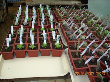 Plantas para la venta en invernadero de acopio