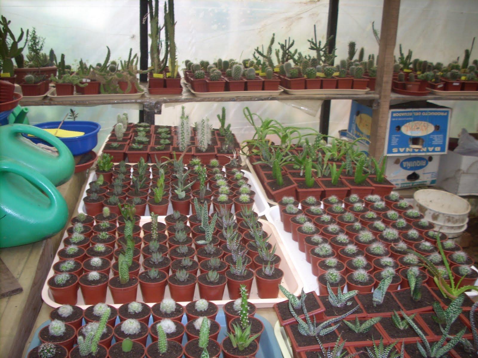 Vivero sanssouci enero 2011 propagaci n de plantas en for Caracteristicas del vivero