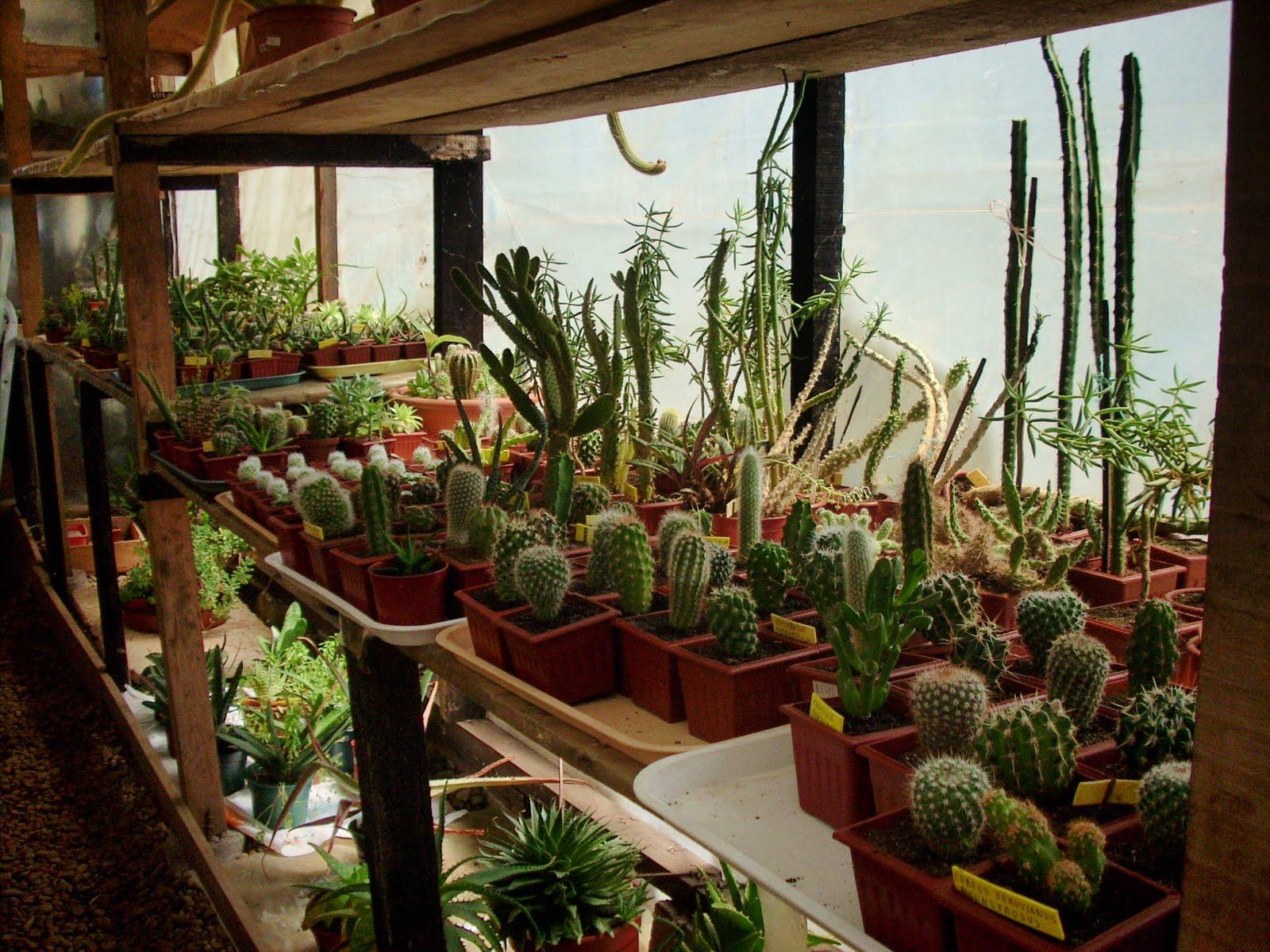 Vivero sanssouci enero 2011 propagaci n de cactus y crasas for Plantas para invernadero