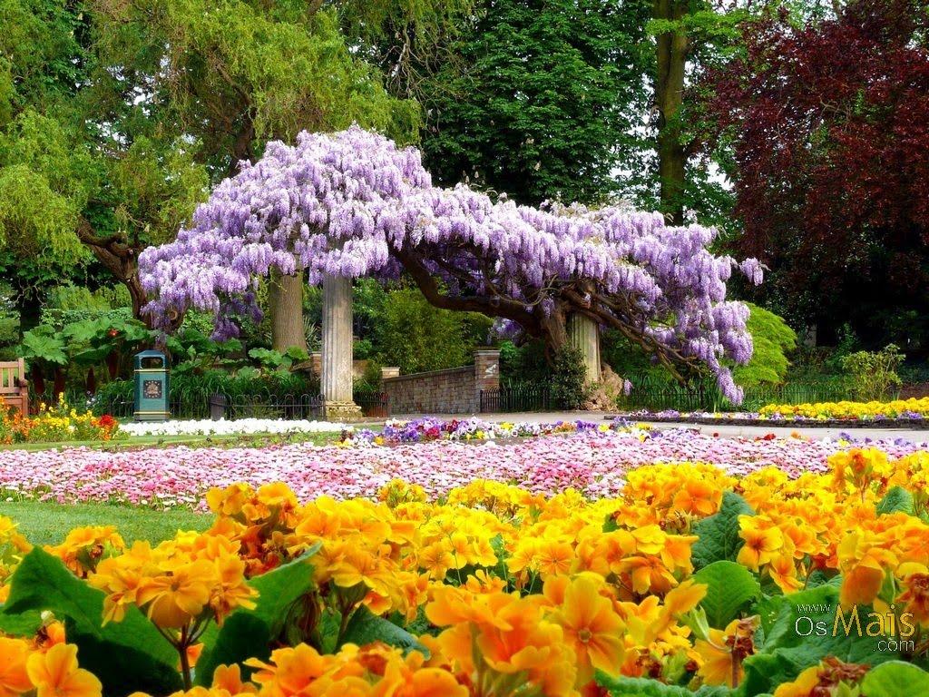 flores no jardim letra:Cyber Letras: O jardim das flores