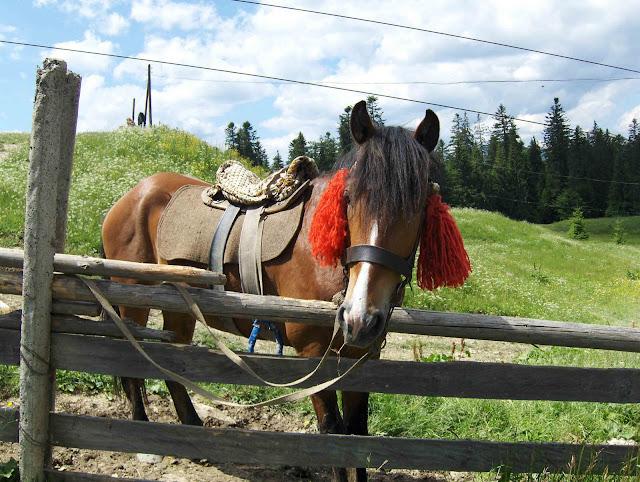 West Ukraine: Horse in Carpathy