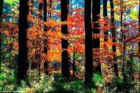 Autumn colours - As cores de Outono