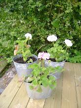 Blomster på terrassen