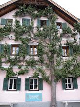 Un albero per ospite