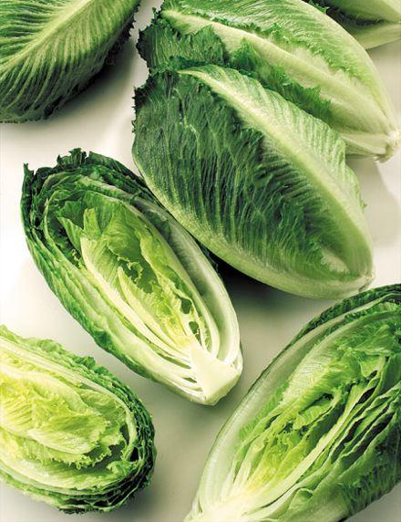 الخس Lettuce romaine.jpg