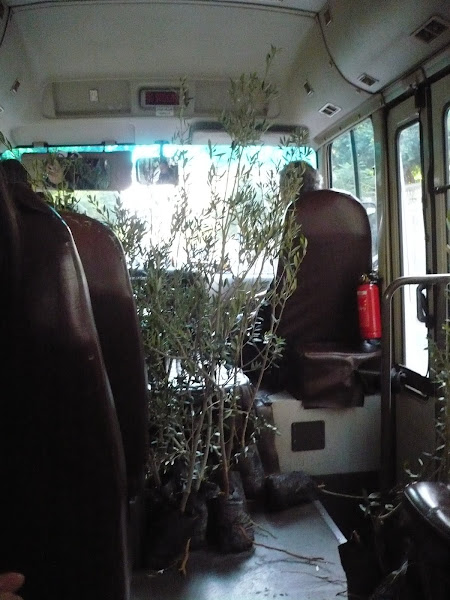 Planting Trees in Anjar