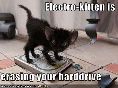 funny-pictures-kitten-erases-your-hard-drive.jpg