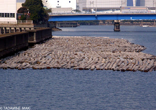 Log storage in water, Shinkiba, Tokyo