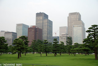 buildings over the pine trees