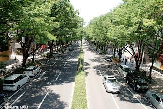 Omotesando Boulevard