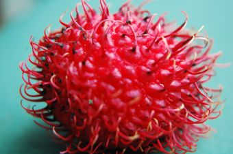 Alien egg? Or Rambutan?