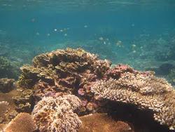 Alam Bawah Laut Pulau Tidung