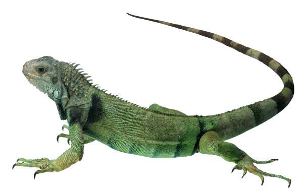 Anfibios: características, clasificación y descripción - animales anfibios imagenes