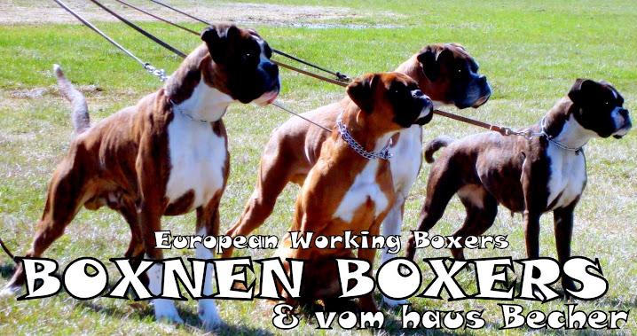 Boxnen Boxers