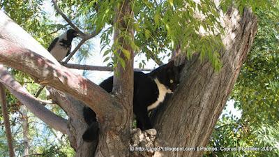 Кот и птица на дереве by TripBY.info