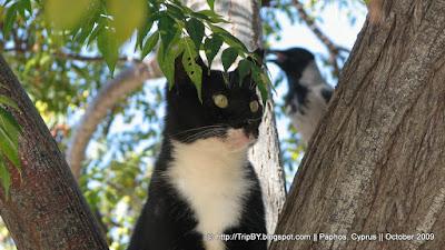 Кот и птица на дереве, Кипр by TripBY.info