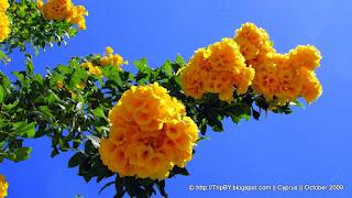 Цветы на Кипре by TripBY
