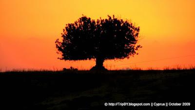 Дерево в закате. Саванна by TripBY.info
