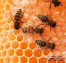 http://3.bp.blogspot.com/_vAtf46soL0c/SDW9BWLe5OI/AAAAAAAAAOI/0h7xBd5h0XA/S230/abejas.jpg