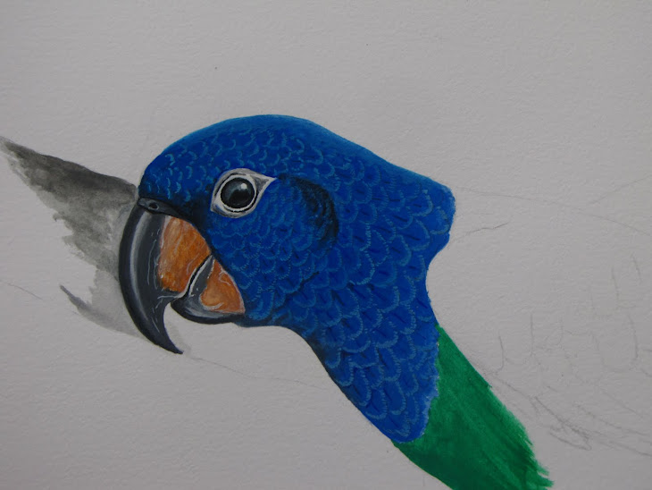 Maitaca da cabeça azul - Pionus menstruus