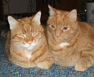 My fur-babies, Jake &amp; Elwood