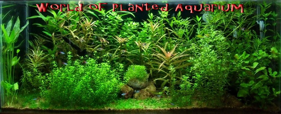 World of Planted Aquarium