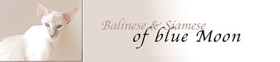 Weitere Informationen unter www.balinesen.ch