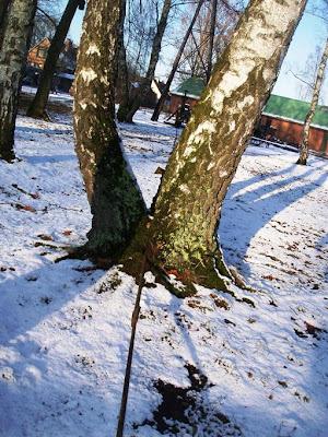 عکسی که می بینید درختی است که دراین موزه بر سر راه یکی از ادوات دوٌار و تجهیزات تولید نفت و استخراج آن قرار گرفته ولی محور انتقال نیروی آن را بدون آنکه درخت را قطع کنند از میان آن عبور داده اند!
