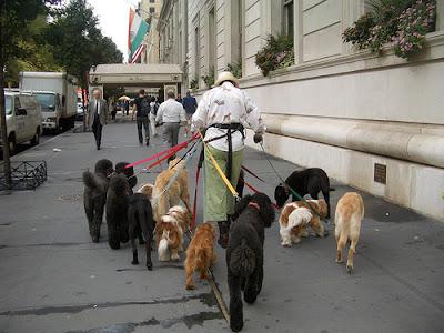 old+lady+dog+walker