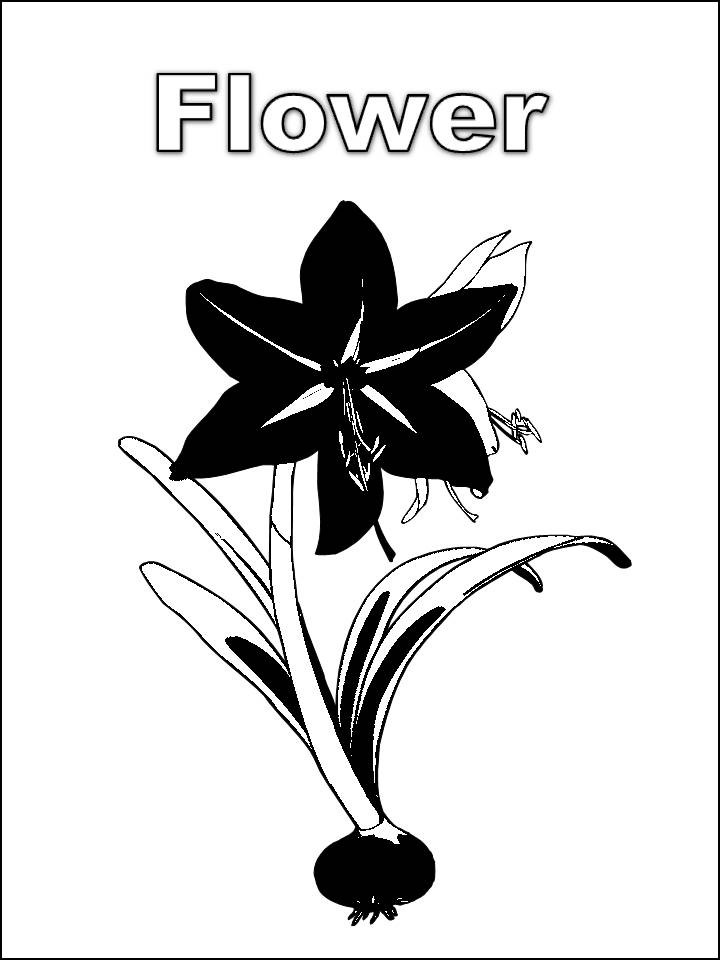 flower coloring pages for preschoolers. Flower coloring pages for kids