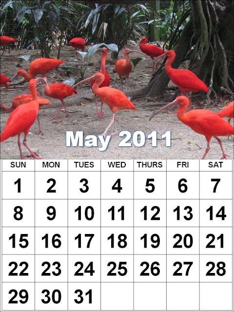may calendar 2011 template. may calendar 2011 template.